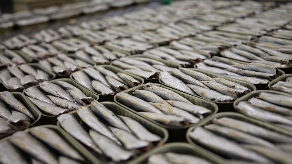 Was sind die Unterschiede zwischen Sardellen, Sardinen und Anchovis?