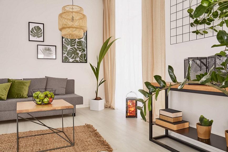 Die passende Zimmerpalme für Ihre Wohnung